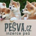 cz.DOGVA.com – inzerce psů a štěňat