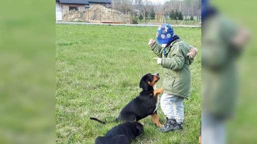 Velký švýcarský salašnický pes s PP - Velký švýcarský salašnický pes (058)