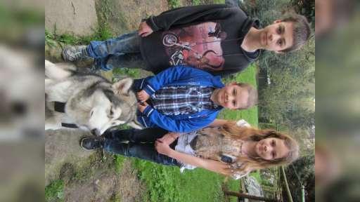 Hleda Nevěstu (Aljašský malamut - pes na prodej) - Aljašský malamut (243)