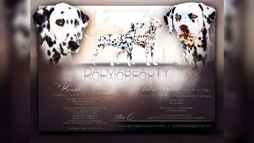 "dalmatini""of Dalmabeauty"" - Dalmatin (153)"
