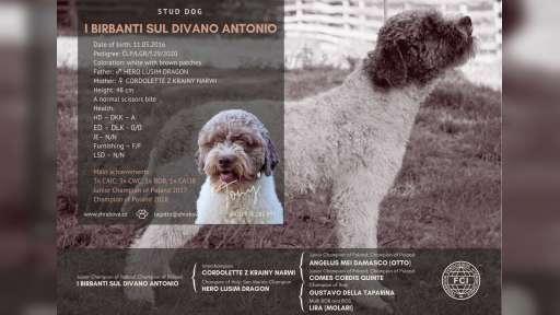 Lagotto Romagnolo - Lagotto Romagnolo (298)