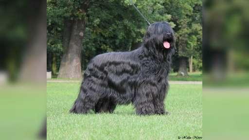 La Xalia Noire - la.xalia.noire