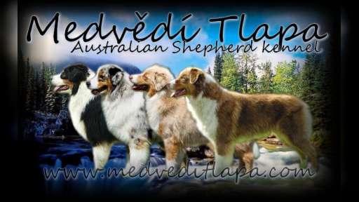 Chovatelská stanice australských ovčáků - Ivana Janulcová