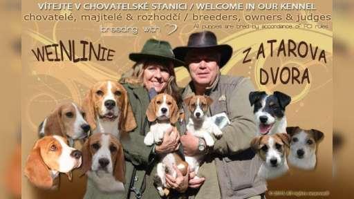 Weinlinie & Jack Russell Terrier - Lenka Frnčová