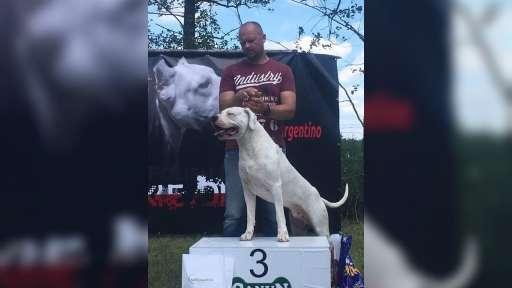 Argentinská doga krycí pes - Argentinská doga (292)