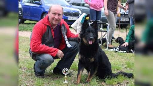 Jolly Vigilo - Chodenländer Hund - Chodský pes